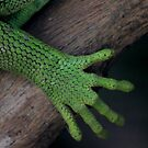Iguana ~ these feet have been places by melodyart