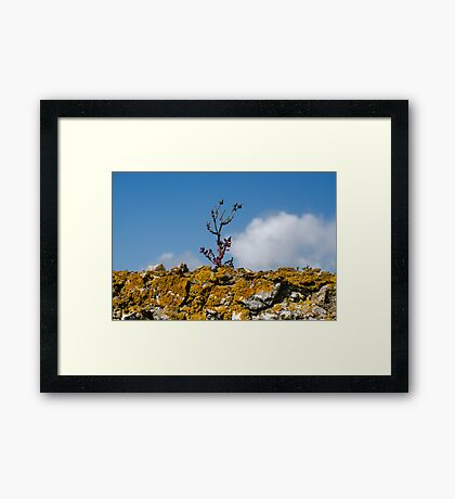 Life on the Wall Framed Print