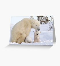 Mother polar bear & her two cubs Greeting Card