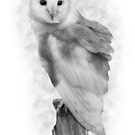 Barn Owl by Miles Herbert