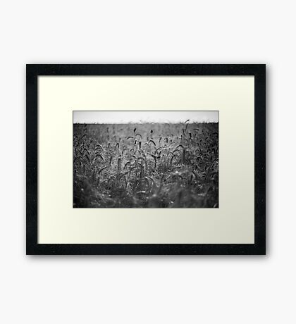 chaos at field Framed Print