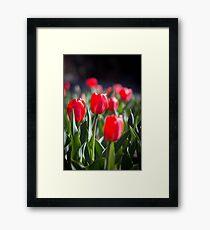 Red Tulips Framed Print