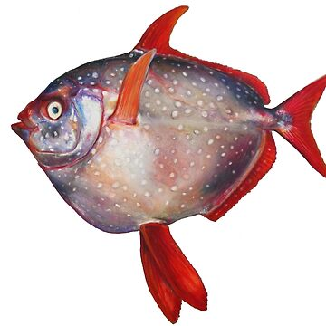 Opah fish by ineslira