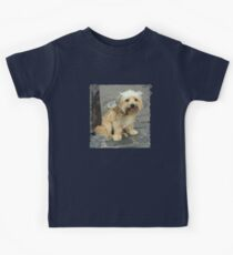 Louie the Shorkie-Tzu : Shih Tzu Yorkshire Terrier (Yorkie) Mix Kids Clothes