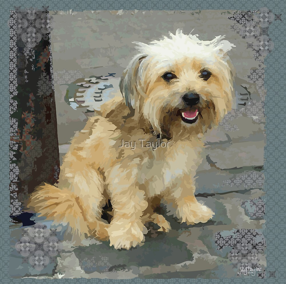 yorkshire terrier and shih tzu mix quot louie the shorkie tzu shih tzu yorkshire terrier 6035