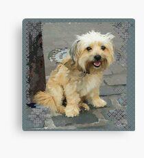 Louie the Shorkie-Tzu : Shih Tzu Yorkshire Terrier (Yorkie) Mix Canvas Print