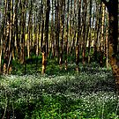 Flowers in the early spring forest by jchanders