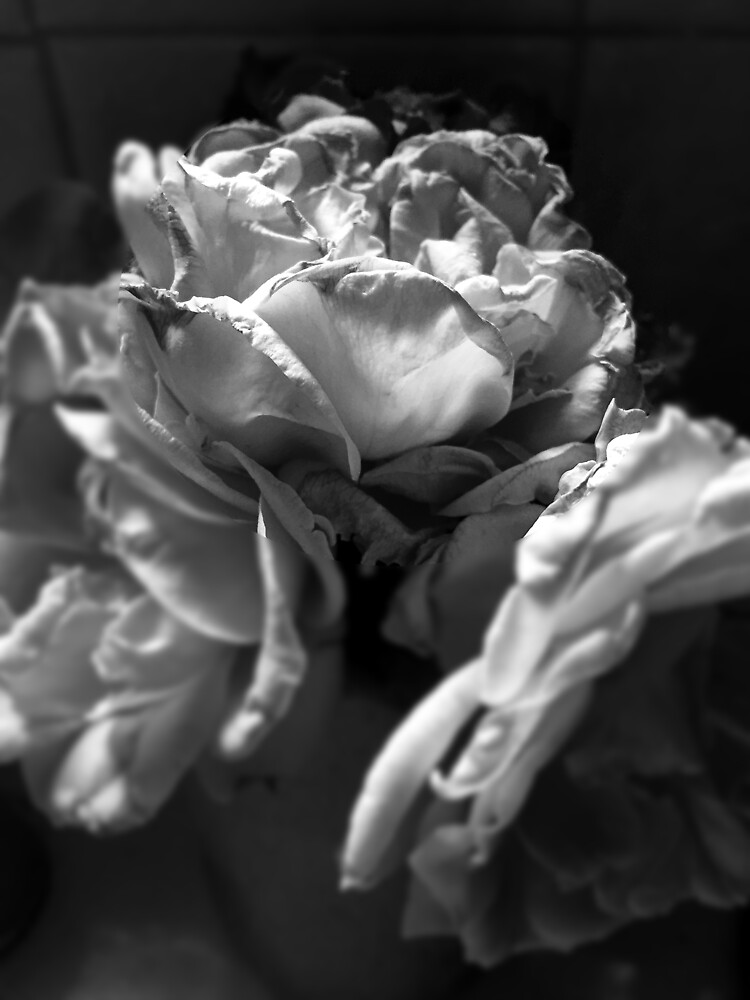 Everything fades - Black and White version from  A Gardener's Notebook by douglasewelch