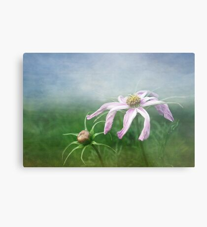 Meadow Sweet Metal Print