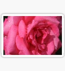 Rose Is a Rose Sticker
