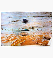 Bras d'Or Stones on Driftwood Poster