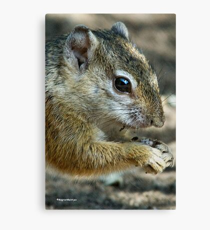 UP CLOSE - THE TREE SQUIRREL – Paraxerus cepapi  Canvas Print