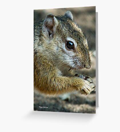 UP CLOSE - THE TREE SQUIRREL – Paraxerus cepapi  Greeting Card