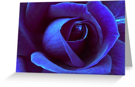 Icy Rose by Julie Thomas