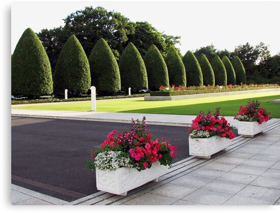 Roses, Begonias and Penstemon - Preston Temple Forecourt by BlueMoonRose