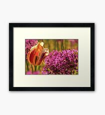 On Fire Tulip Framed Print