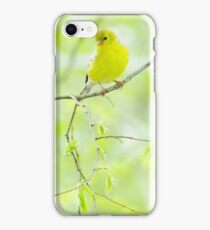 Lovely Wild Canary  iPhone Case/Skin