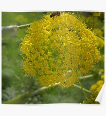 Giant Fennel & Bee Poster