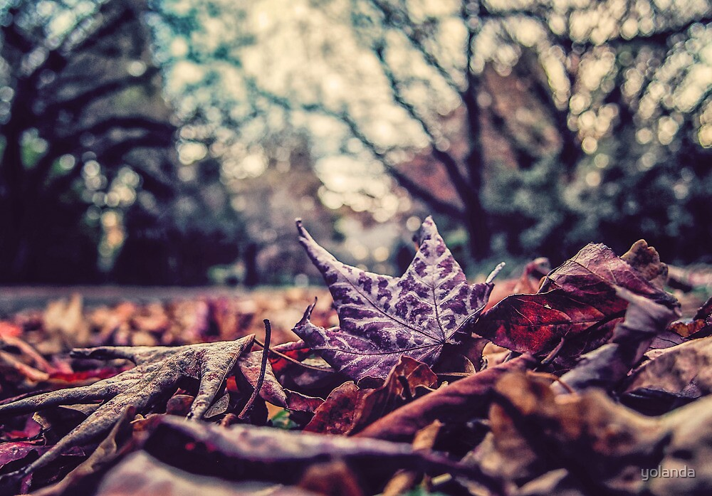 Autumn Leaves by yolanda