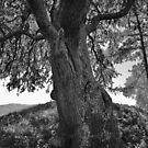 «Tree of Life» de Paulette1021