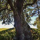 «Family Tree» de Paulette1021