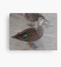 Quack, Quack, Quack Metal Print