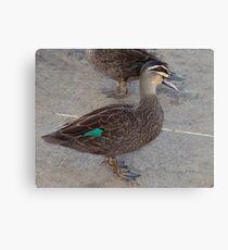 Quack, Quack, Quack Canvas Print