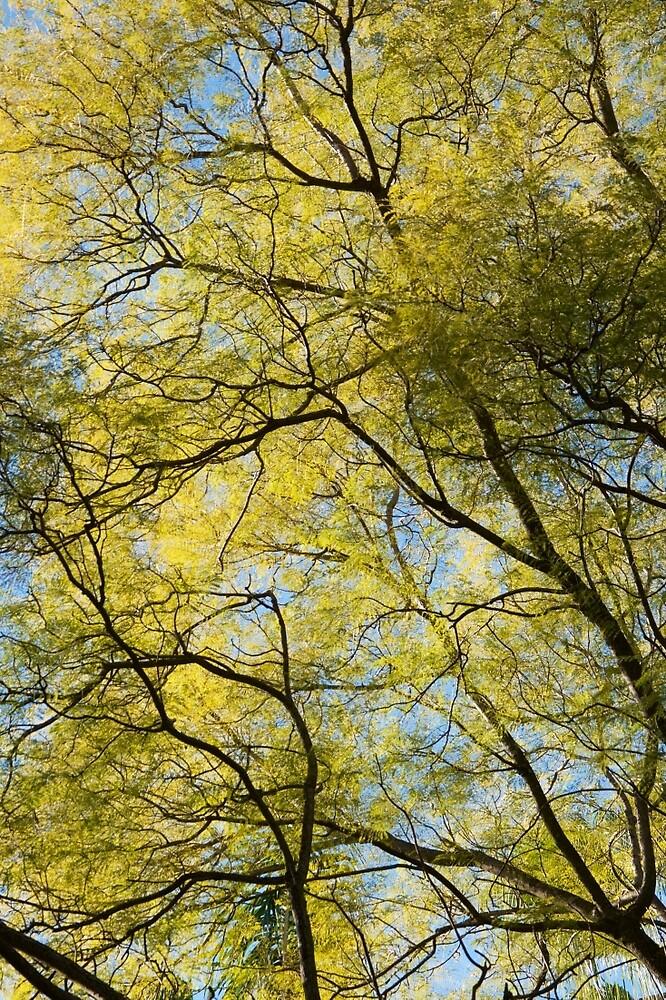 Winter sun through the leaves by Jack Bridges