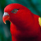 Chattering Lory by Damienne Bingham