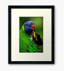 Rainbow Lorikeet III Framed Print