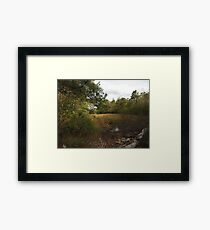 Meadow Grasses Framed Print