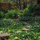 Hidden Garden by Tomas Abreu