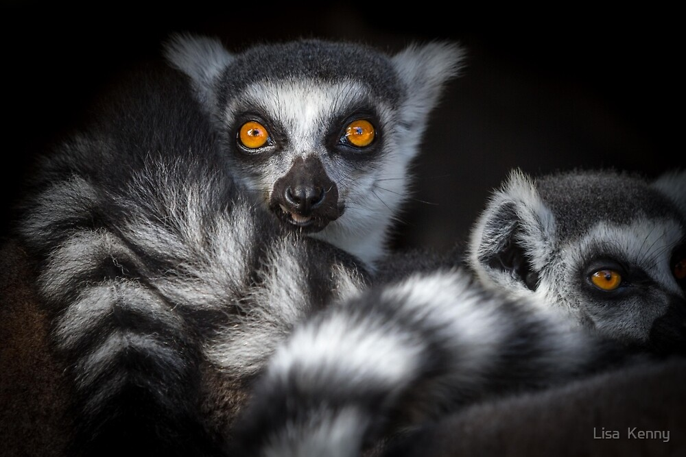 ~ Lemur Love ~  by Lisa Kenny