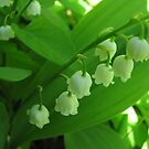 Lily of the Valley by Phoebetales