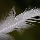 wet feather by Keith Midson