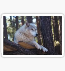 Timber Wolf Sentinel Sticker