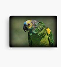 Bird Bird Bird Canvas Print