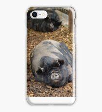 Sleeping Pot Bellied Pigs iPhone Case/Skin