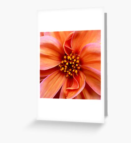 Sunset Condensed Greeting Card