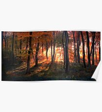 Autumn Morning Woods Poster