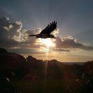 Sunset Raven by Graham Povey