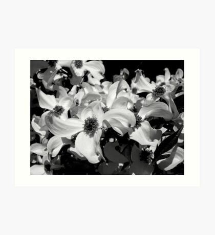 Black & White Dogwood Art Print