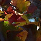 Autumn Brilliance by Martice