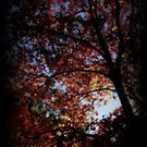 Burnt Autumn Dream by Martice