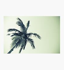 Palm tree against sky low angle point of view monochrome faded image. Photographic Print