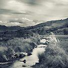 The Stream by Linda Cutche