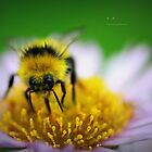 """ Yellow Bee On Pink "" by Richard Couchman"