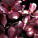 Dogwood at night by botanicalsbyV