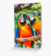 Love Bites - Parrots in Silver Springs Greeting Card