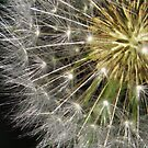 Nature's Sparkler by lorilee